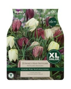 Taylor's Bulbs Snake's Head Fritillary Fritillaria Meleagris Bulbs - Pack of 35