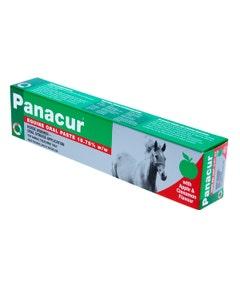 Panacur Equine Paste Syringe