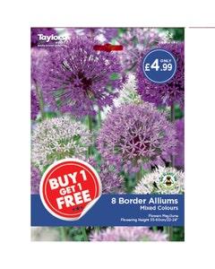 Taylor's Bulbs Mixed Colour Border Alliums Bulbs - Pack of 8