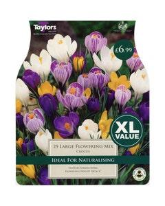Taylor's Bulbs Large Crocus Flowering Mix Bulbs - Pack of 25