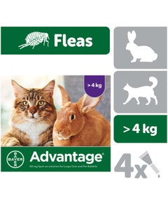 Advantage 80 Spot-On for Large Cats and Pet Rabbits - 4 x 0.8ml