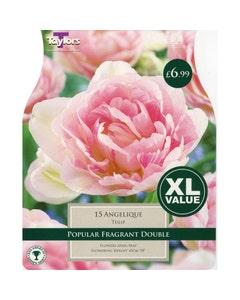 Taylor's Bulbs Angelique Tulip Bulbs - Pack of 15