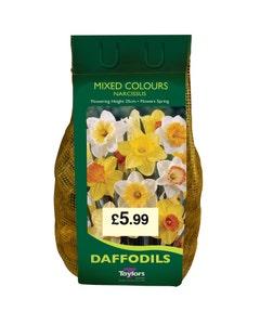 Taylor's Bulbs Mixed Colour Narcissi Carripack - 2kg