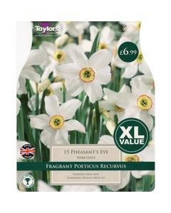 Taylor's Bulbs Pheasant's Eye Narcissus Bulbs - Pack of 15