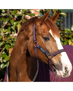 Horseware Amigo Fig & Navy Head Collar - Pony