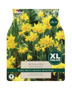 Taylor's Bulbs Tete A Tete Narcissus Bulbs - Pack of 20