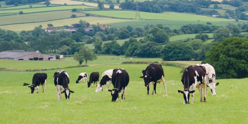 Six steps to help farmers lower the environmental impact of cow diets