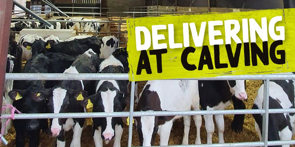 delivering at calving