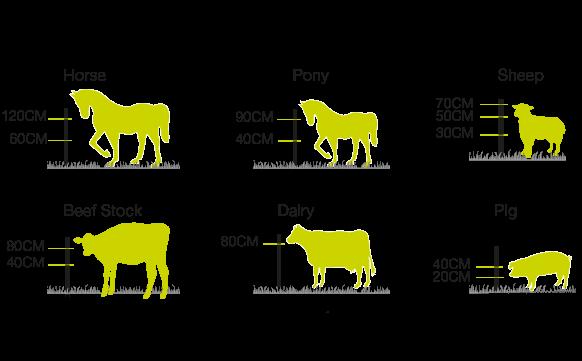 Animal Types